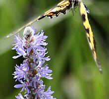 Butterfly Landing by BornBarefoot