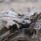 Driftwood - Horseshoe Beach Newcastle by Rochelle Buckley