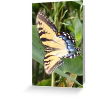 On the Wings of a Butterfly Greeting Card