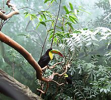 Toucans at the Zoo by PCcruncher