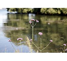 Flowers at the Lake Photographic Print