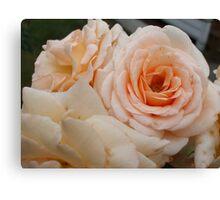 Brandy Roses Canvas Print