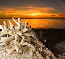 Coral Sunset - Cocos (Keeling) Islands by Karen Willshaw