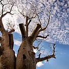 BOAB TREE | KINGS PARK, PERTH  by webgrrl