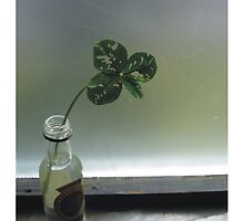 Luck in a Bottle by Indelibly-Yours