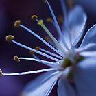 Blossoming by Jenni77