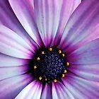 Purple Macro. by CourtneyE
