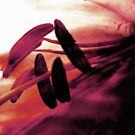 Fushia Dream by Trish Woodford