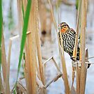 Hiding in the Reeds by Nazareth