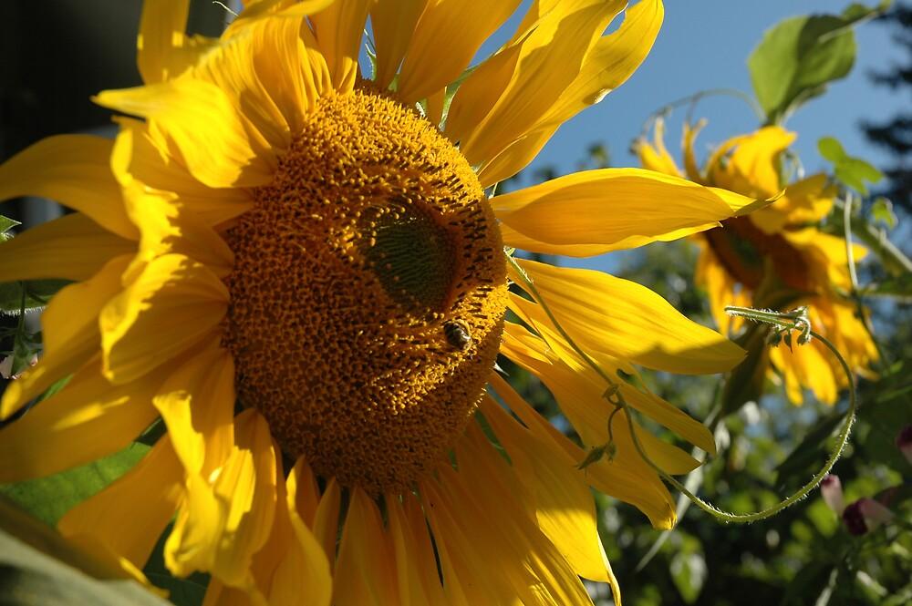 Sunflower Sensation by Ainsley Kellar Creations