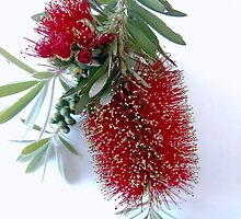 Bottle brush by Graham Buffinton