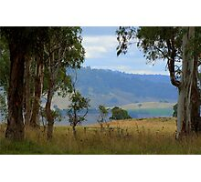 Framed by gum trees Photographic Print