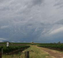 Storm over the Vineyards by lulisa