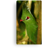 Bird - Knysna Turaco Canvas Print