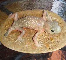 Knob tailed Gecko  by Alex Gardiner