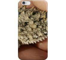 Furry Horned Frog