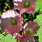 Pink Holly Hocks by Jan  Tribe