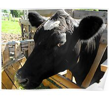 Holly the Cow Poster