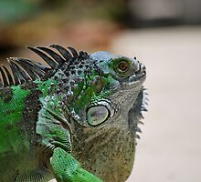 Iggy The Iguana by Nick Carter