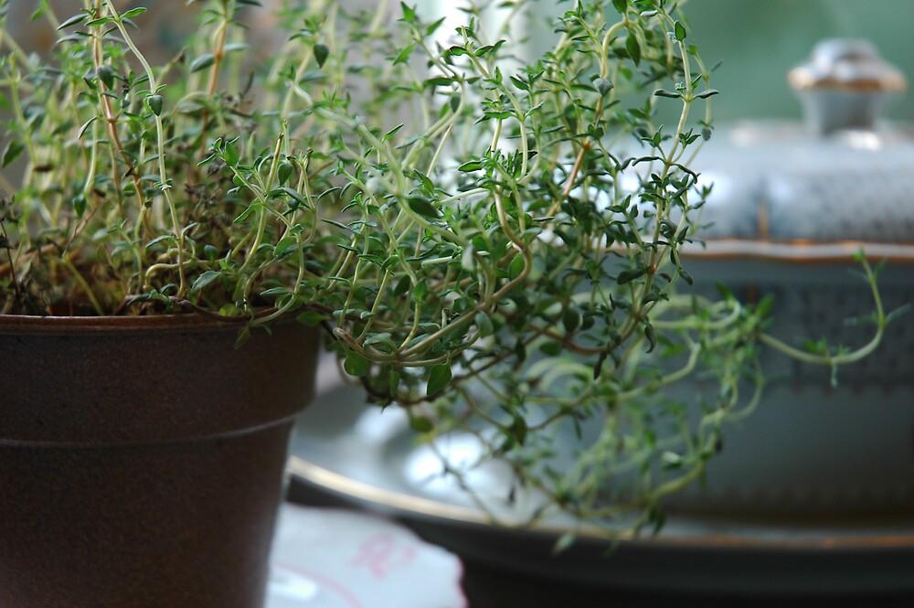 Nana's Kitchen Herbs by Ainsley Kellar Creations
