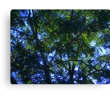 Looking Up! Canvas Print