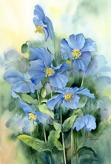 Himalayan Poppies by artbyrachel