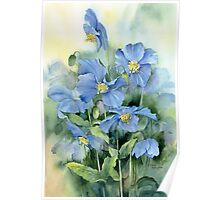 Himalayan Poppies Poster