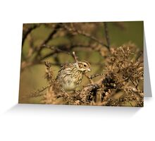 Reed Bunting - female Greeting Card