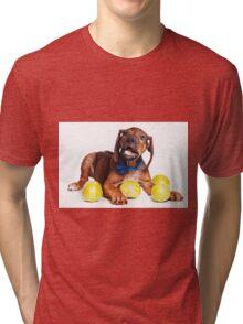 Funny red Ridgeback puppy Tri-blend T-Shirt