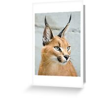 Caracal small cat Greeting Card