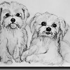 Maltese pups by Linda Costello Hinchey