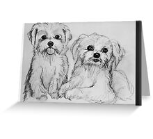 Maltese pups Greeting Card