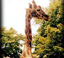 Giraffe by Anastasia Frost