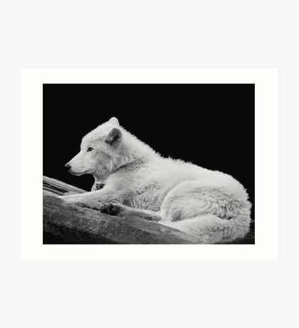 White Arctic Wolf Art Print