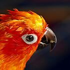 The Sound Of Colour - Sun Conure by AndreaEL