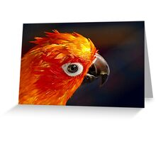 The Sound Of Colour - Sun Conure Greeting Card