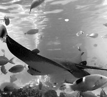 rays in black and white by gaylene goodsell