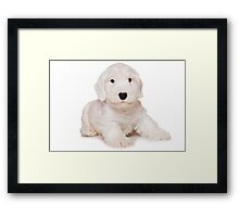 White Terrier puppy Framed Print