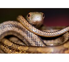 snake eyes Photographic Print