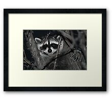 Night Visitor Framed Print