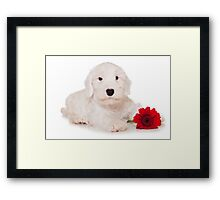 white terrier puppy and red flower Framed Print