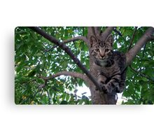 Chillaxin' in the trees Canvas Print