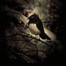 Little Birdie by Trish Woodford