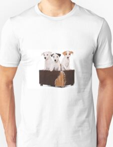 Three Jack Russell Terrier puppy and an old box T-Shirt