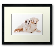 Two Australian Shepherd puppy Framed Print