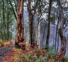 Ghosts In The Mist Revisited - The Great Alpine Road, Australia - The HDR Experience by Philip Johnson