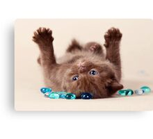 Funny brown kitten Canvas Print