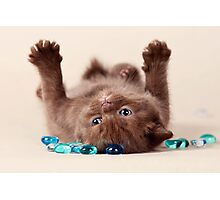 Funny brown kitten Photographic Print