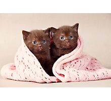Two funny furry kitten Photographic Print