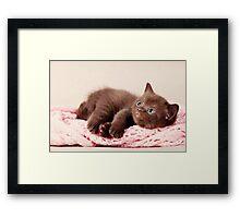 funny furry kitten Framed Print